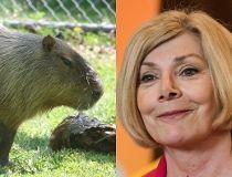 Capybara DiNovo