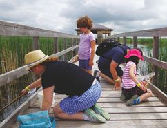 The Palmer family hunts for bugs together on the main boardwalk at Oak Hammock Marsh during the Bug Derby. (Meghan Kjartanson, Interlake Publishing, Postmedia Network)