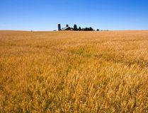 Winter wheat (Postmedia Network file photo)