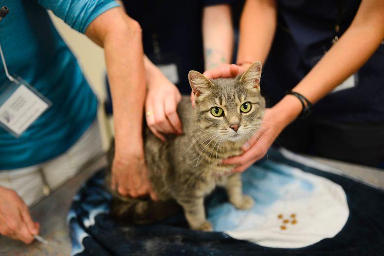 Vets for Pets Program