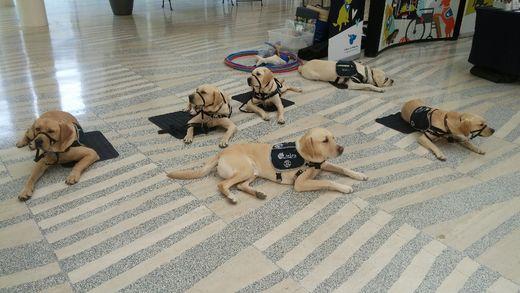 Accredited Service Dog Training Schools