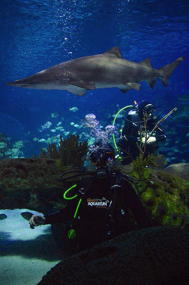 Dive into Ripley's Aquarium of Canada. (CNW Group/Ripley's Aquarium of Canada)