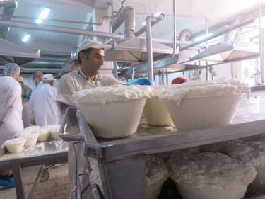 Fresh cheese production. (Rita DeMontis/Toronto SUN)