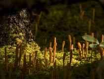 Mushrooms near Burnt Timber