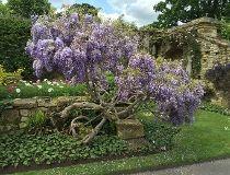 Kent garden