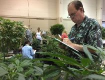 Pot plants on display at Oregon State Fair_3