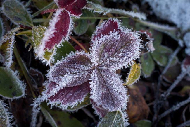 Frost Sibbald Flats