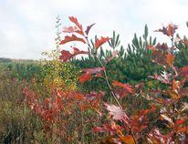 50 Million Trees Program planted site Supplied Photo