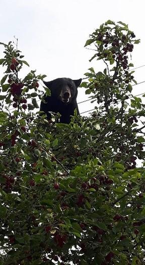 Bear outdoors photo