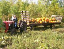 <p>Pumpkins on the wagon, at McMaze.</p><p> Handout/Cornwall Standard-Freeholder/Postmedia Network