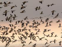 Mike Drew birds