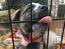 Edmonton dog breeding operation shut down