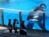Tilikum orca seaworld
