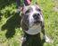 Pit bull FILES Jan. 23/17