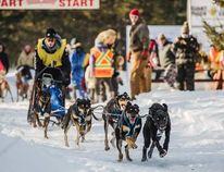 Blyth resident Luke Siertsema dog sledding. (Photo courtesy of Cindy Lottes)