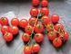 The Singing Gardener loves his tomatoes