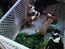 Pit bull puppies stolen