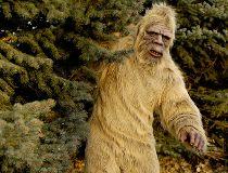 Bigfoot sasquatch