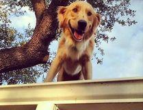 (Instagram.com/hucktheroofdog)