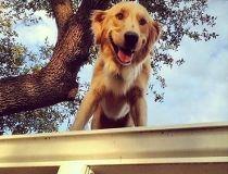 Huckleberry dog May 15/17