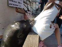 sea lion video