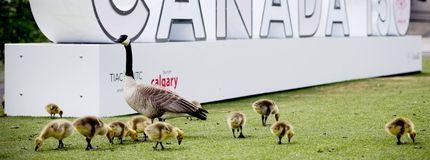 Calgary celebrates Canada Day