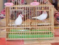 bird fortune teller