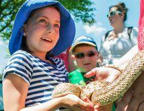 Taylor Bertelink/The Intelligencer Amber Arsenault, 8, holds a bull snake named Ferdinand during a special event held at Riverside Park Wednesday.