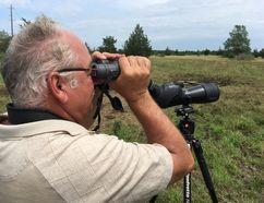 Kurt Hennige looks for eastern loggerhead shrike a property near Centreville that Nature Conservancy of Canada announced it was expanding on Monday, July 10, 2017. Elliot Ferguson/Kingston Whig-Standard/Postmedia Network