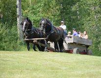 Families take a free wagon ride during Family Fun Day at Blue Ridge Recreation Area on July 22 (Peter Shokeir | Mayerthorpe Freelancer).