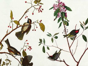 Audubon: Beyond Birds, Plants portraits and conservation heritage of John James Audubon NRC Reasearch Press 2009 JOHN JAMES AUDUBON