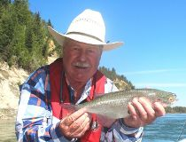 Neil's North Saskatchewan River goldeye fell for a Size 20 Spent Trico fly