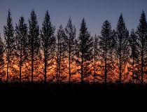 Sunrise near Crossfield