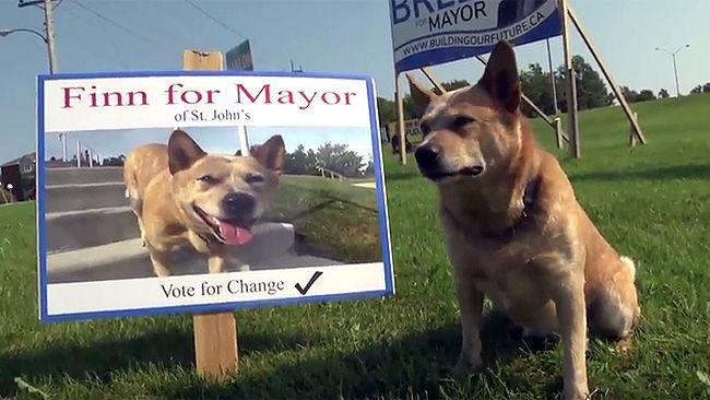 Finn the dog is running for mayor in St. John's. (YouTube Screen grab)