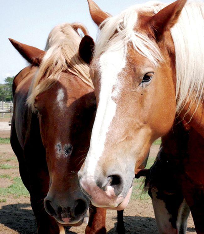 Spirit's Whisper Ranch, near Straffordville. (CHRIS ABBOTT/TILLSONBURG NEWS)