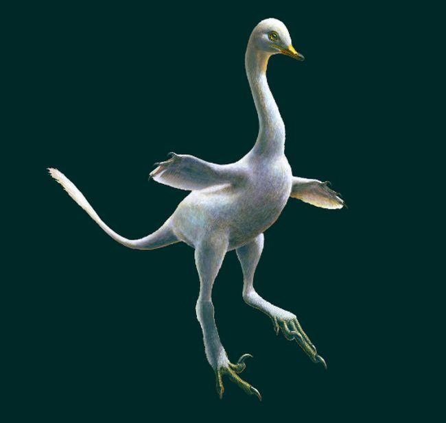 Halszkaraptor, a new and strange raptor dinosaur from Mongolia.