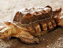 Stanley the tortoise was stolen from the Elmvale Jungle Zoo. Elmvale Jungle Zoo Facebook image