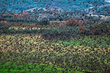 Thousands of starlings flock above farmland near Eleftheroupolis January 3, 2011. REUTERS/Yannis Behrakis