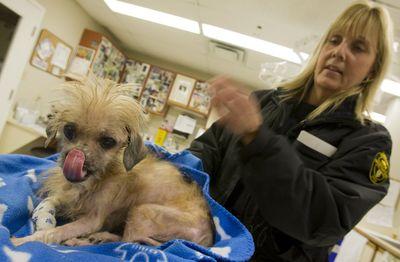 Lick! (Jack Boland / Toronto Sun)