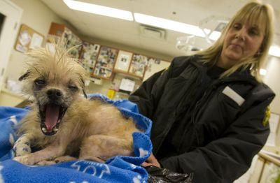 Big yawn. (Jack Boland / Toronto Sun)