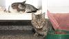 Cats seen at the Niagara Falls Humane Society. (QMI Agency)