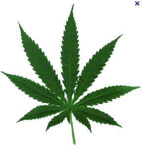 Marijuana leaf graphic