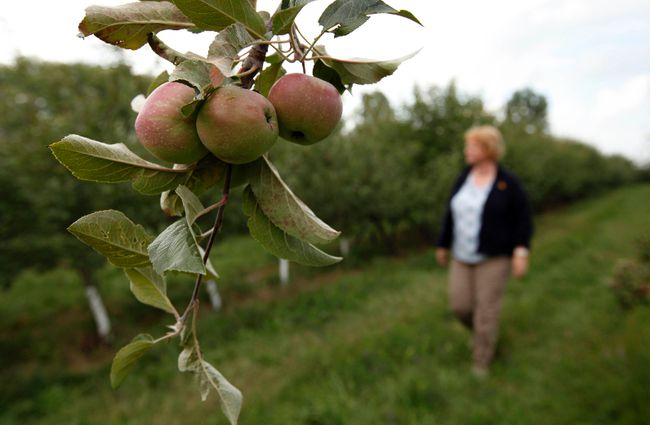 Apple grower