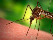 Mosquito filer