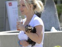 Britney Spears dog
