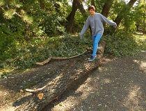 Dakota Anderson-Sharples downed tree Riley Park