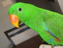 Melynda Hebert parrot