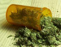 askamy-weed