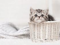 Kitten in a basket