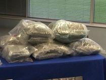 Halton Regional Police seized 105 pounds of pot during an eight-month drug investigation. (CHRIS DOUCETTE/Toronto Sun)